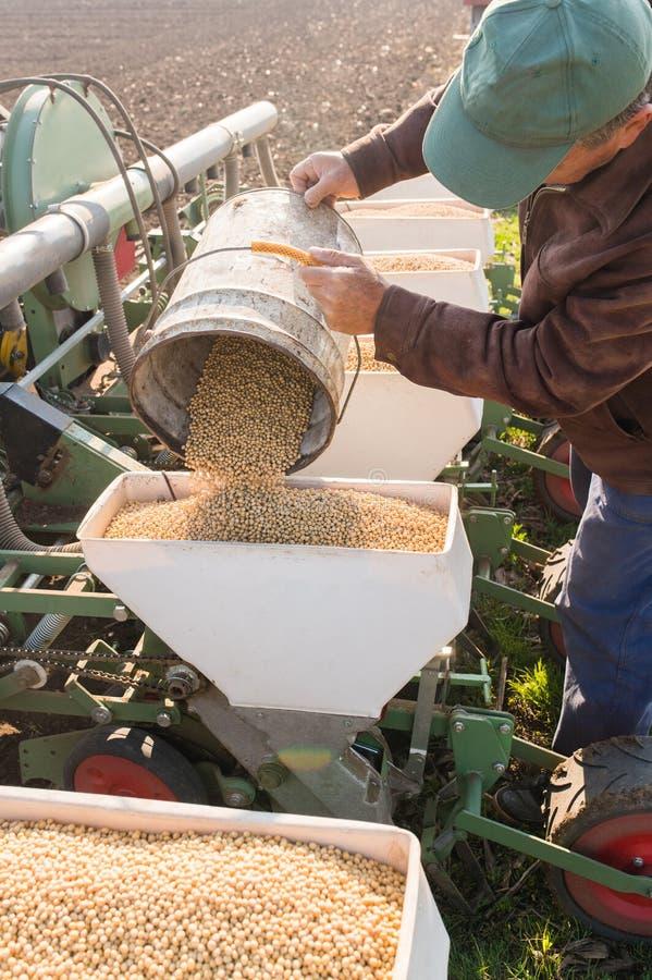 L'agriculteur avec la graine de versement de soja de boîte pour semer cultive à l'agricultura image libre de droits