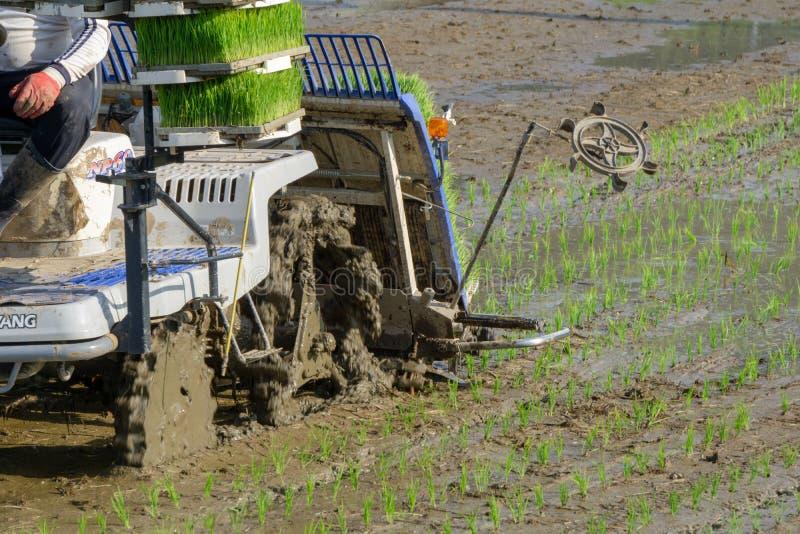 L'agriculteur coréen monte le type transplantoir actionné par l'électricité d'équitation de riz à la jeune plante le jeune riz ve image stock