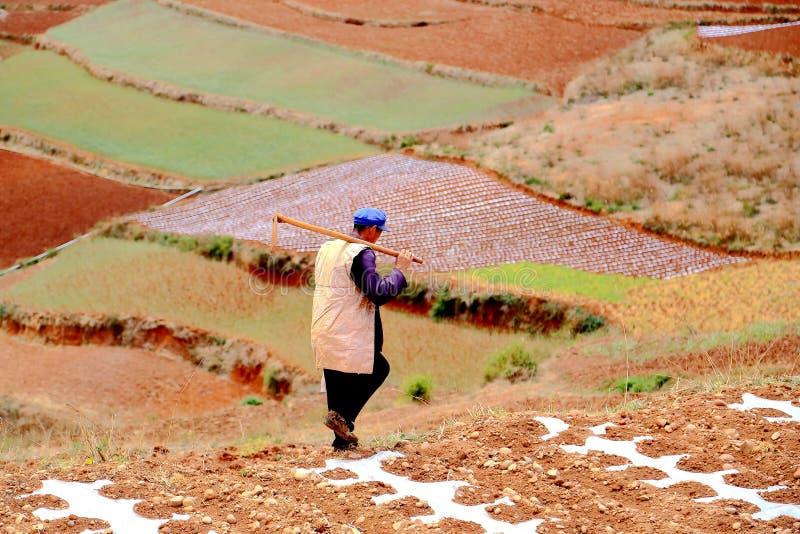 L'agriculteur dans la région scénique de sol rouge de Dongchuan photos libres de droits