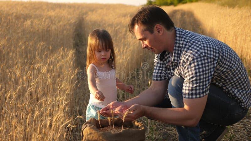 L'agriculteur de père joue avec peu de fils, fille dans le domaine grain de blé dans des mains d'enfant Le papa est un agronome e image libre de droits
