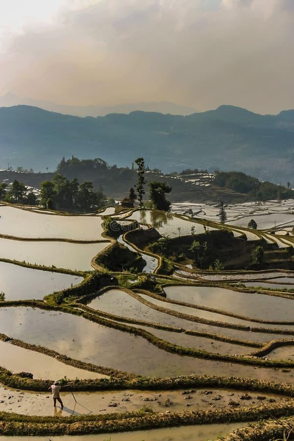 L'agriculteur s'occupe son champ de rizière images libres de droits