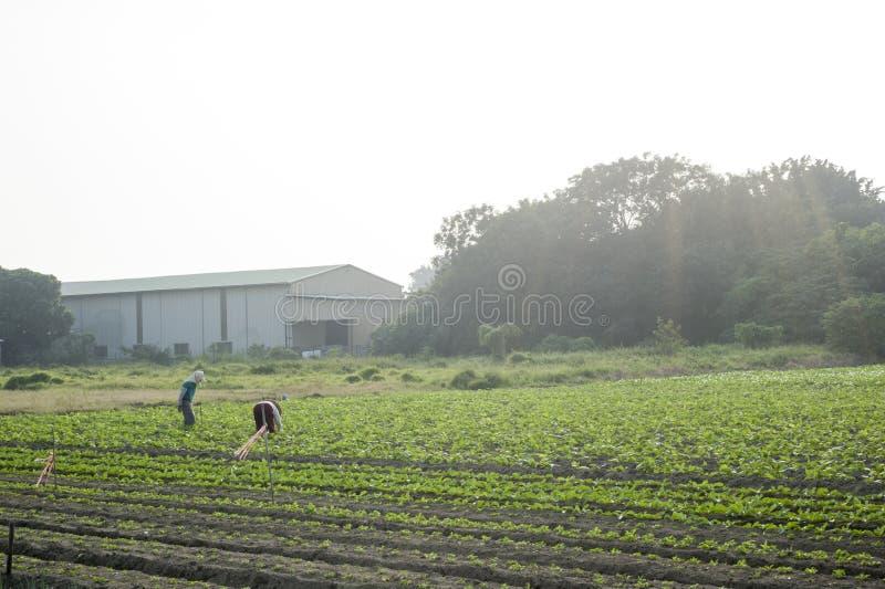 L'agriculteur se tenant dans la ferme photos libres de droits