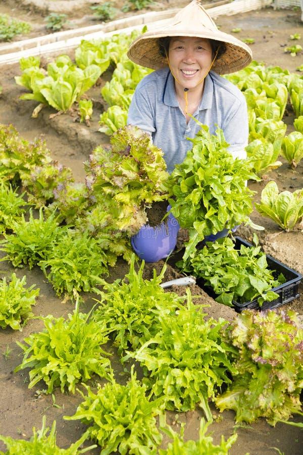 L'agriculteur supérieur féminin heureux travaillant dans les légumes cultivent photo stock