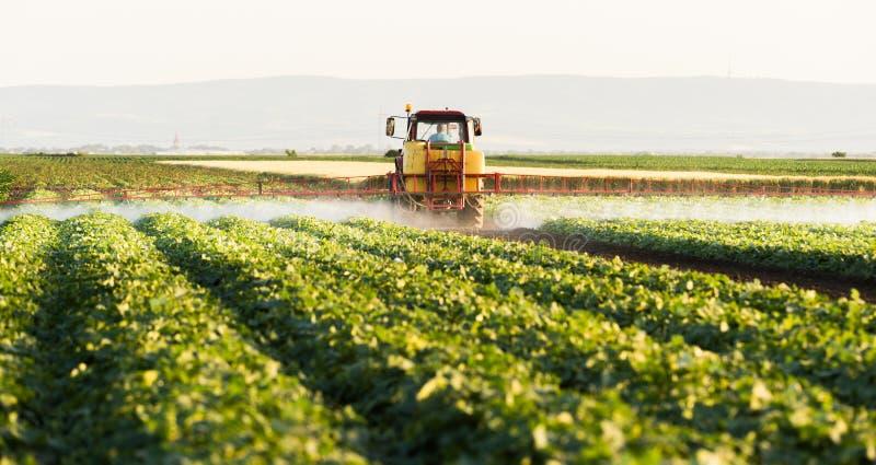 L'agriculteur sur un tracteur avec un pulvérisateur fait l'engrais pour le jeune légume photo stock