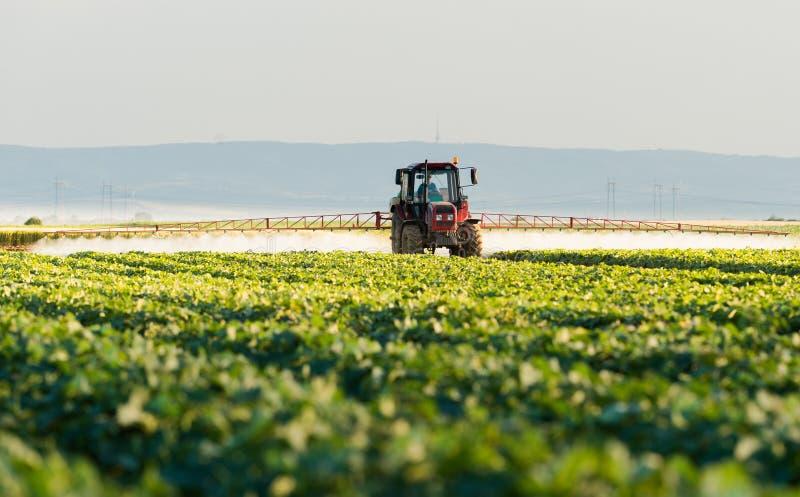 L'agriculteur sur un tracteur avec un pulvérisateur fait l'engrais pour le jeune légume images stock