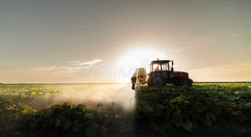 L'agriculteur sur un tracteur avec un pulvérisateur fait l'engrais pour le jeune légume photo libre de droits