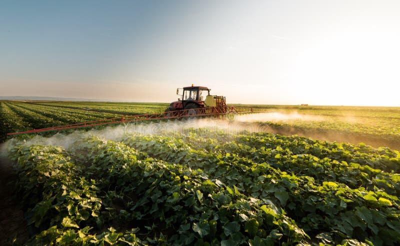 L'agriculteur sur un tracteur avec un pulvérisateur fait l'engrais pour le jeune légume image stock