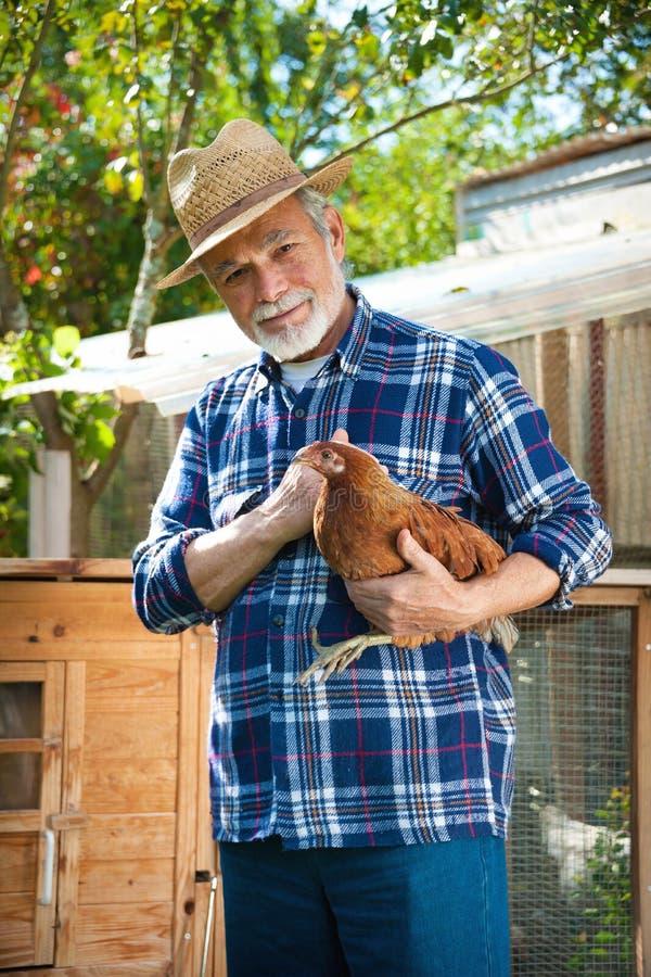 L'agriculteur tient le poulet dans des ses bras devant la maison de poule images libres de droits