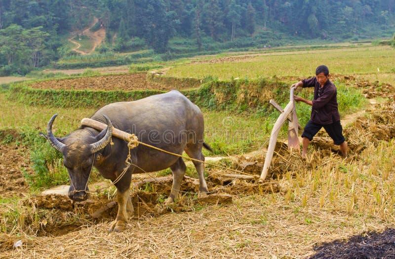l-agriculteur-vietnamien-du-nord-travail
