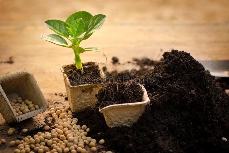 L'agriculture, usine, graine, jeune plante, usine s'élevant sur le papier réutilisent p photo stock