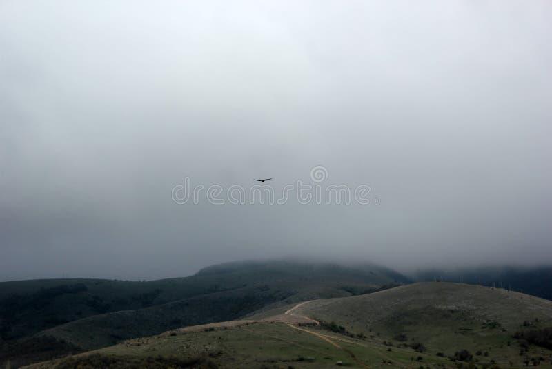 L'aigle monte au-dessus des montagnes dans le brouillard image libre de droits