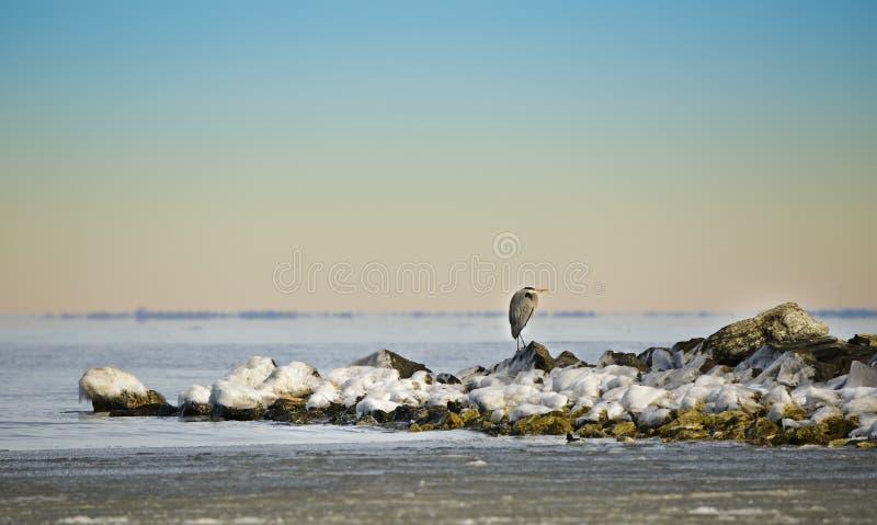 L'airone di inverno immagini stock libere da diritti