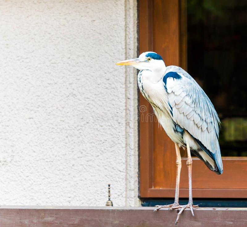 L'airone sta nei precedenti della finestra, Kyoto, Giappone immagini stock libere da diritti