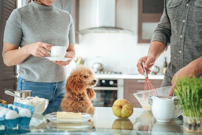 L'ajouter au chien fait le petit déjeuner photos stock
