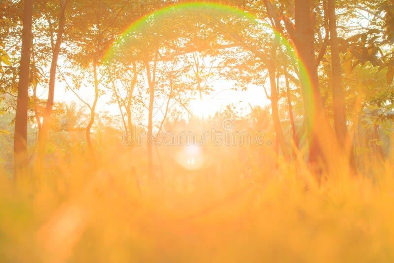 L'alba dorata splende giù intorno all'albero ed al pascolo fotografie stock libere da diritti