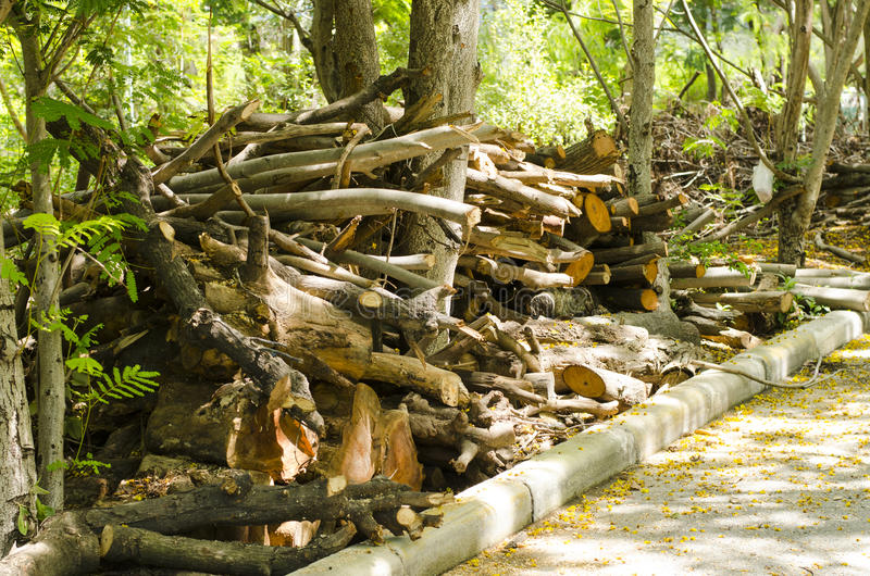L'albero è stato tagliato insieme giù il bordo della strada fotografia stock