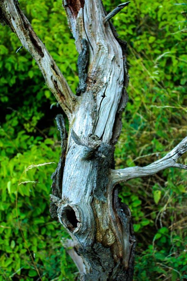 L'albero che porta il colore fuori fotografie stock libere da diritti