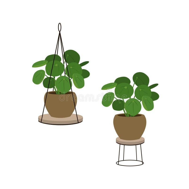 L'albero cinese dei soldi in un vaso in pianta decorativa sta illustrazione vettoriale