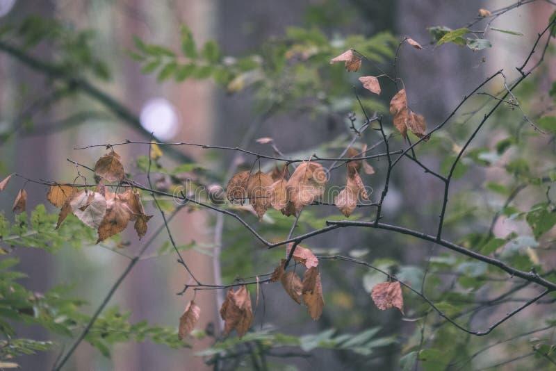 l'albero colorato lascia il modello fertile in foresta con i rami e la luce solare in natura in anticipo di autunno alla campagna immagini stock libere da diritti
