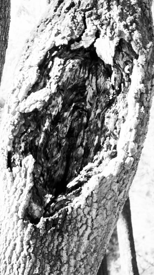 L'albero con vita segna in bianco e nero fotografia stock