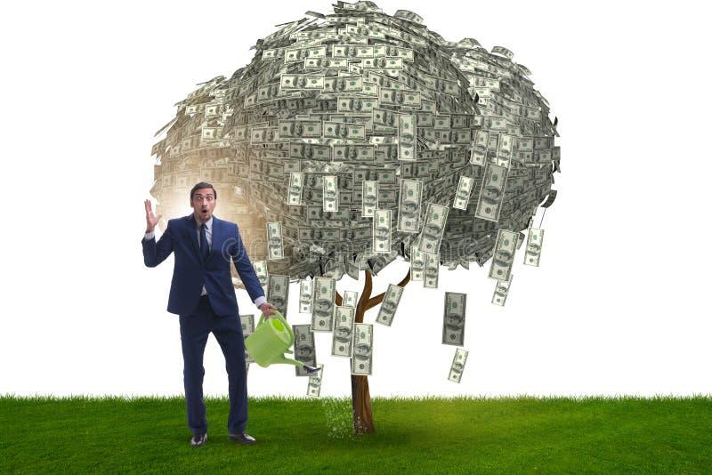 L'albero d'innaffiatura dei soldi dell'uomo d'affari nel concetto di investimento fotografie stock libere da diritti
