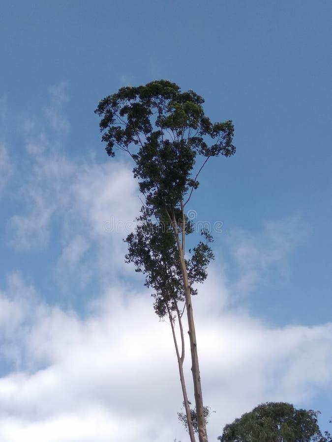 L'albero davanti alla casa e le nuvole sono pieni di ultimi giorni fotografia stock libera da diritti
