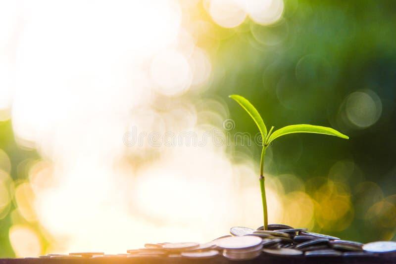 L'albero della crescita della crescita e di finanza si inverdisce il fondo con argilla nera fotografia stock libera da diritti