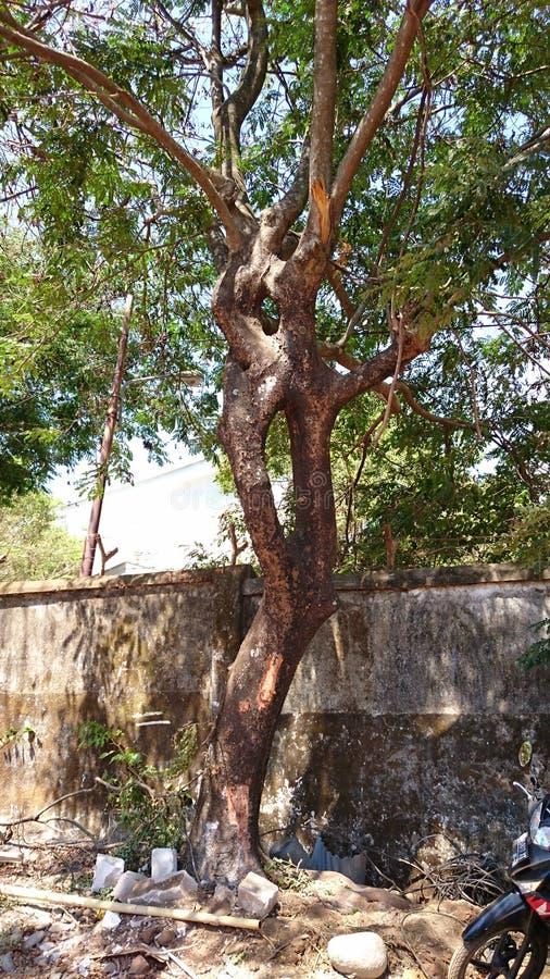 L'albero della giunzione immagine stock libera da diritti
