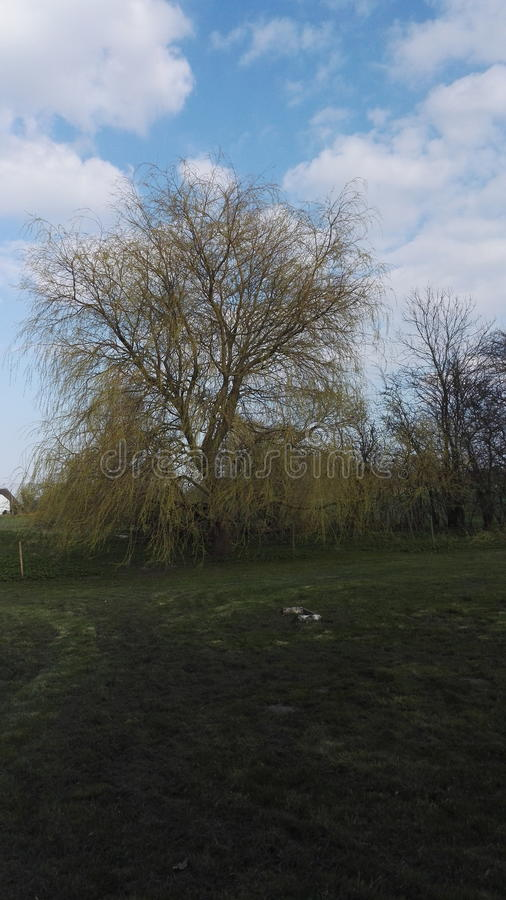 L'albero della molla immagini stock