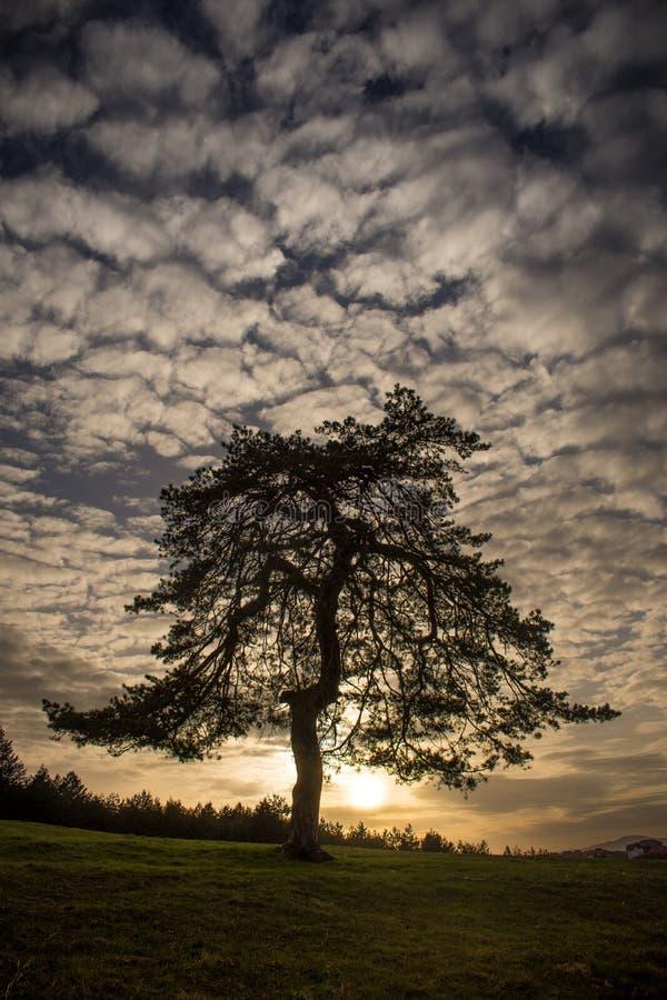 L'albero delle tentazioni immagini stock