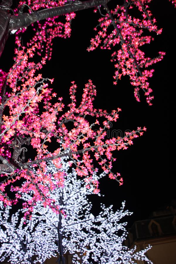 L'albero di abete va con le gocce di acqua bene dettagliate fotografie stock