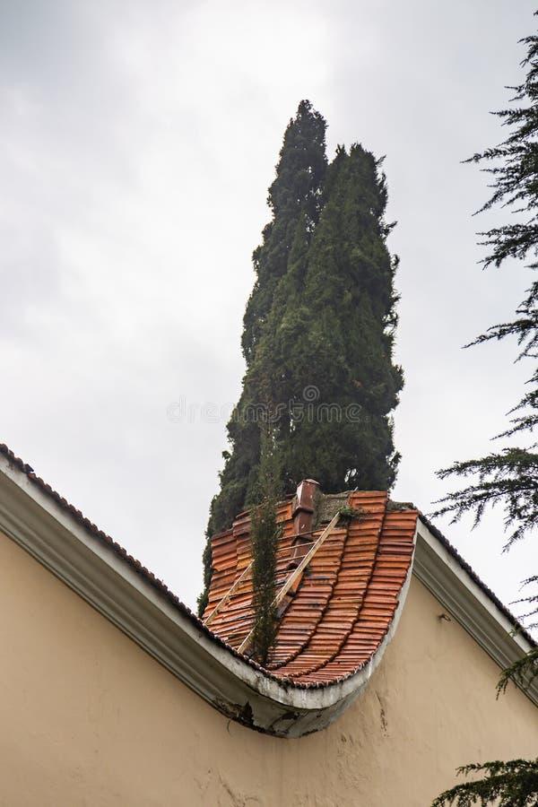 L'albero di Cypress attacca fuori da dietro un tetto piastrellato recinta Costantinopoli, Turchia fotografia stock