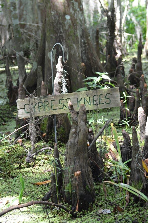 L'albero di Cypress e i usneoides di tillandsia in Barataria conservano la palude nuovo Orlean Luisiana immagini stock libere da diritti