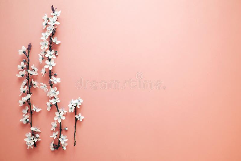 L'albero di fioritura della primavera con i fiori bianchi su fondo di corallo Spazio per la vostra progettazione Colore di tenden immagine stock