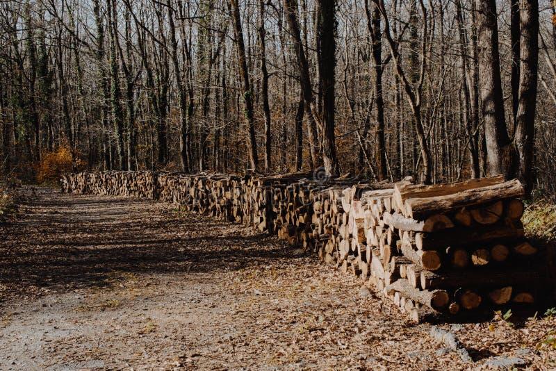L'albero di legno del fuoco registra i tronchi di riserva accatastati su immagini stock