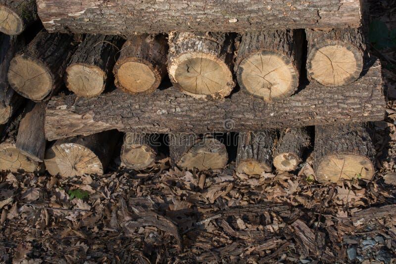 L'albero di legno del fuoco registra i tronchi di riserva accatastati su fotografia stock