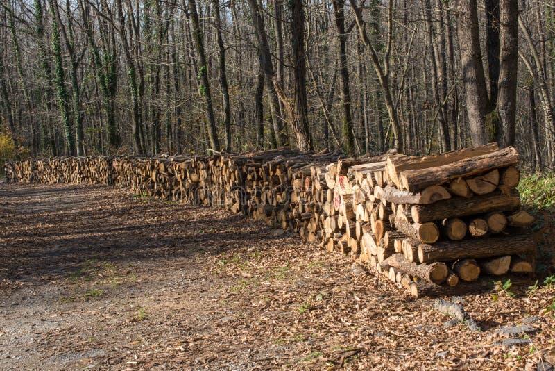 L'albero di legno del fuoco registra i tronchi di riserva accatastati su immagine stock