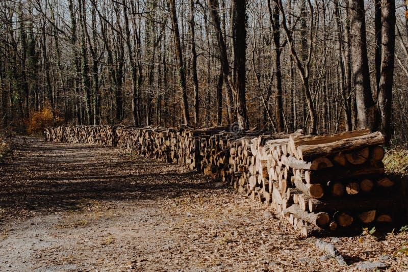 L'albero di legno del fuoco registra i tronchi di riserva accatastati su fotografie stock libere da diritti