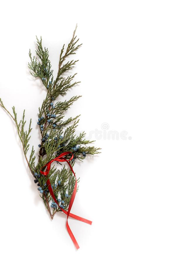 L'albero di Natale con i coni rasenta un fondo bianco Albero sempreverde di festa del nuovo anno, progettazione verde dell'angolo immagine stock