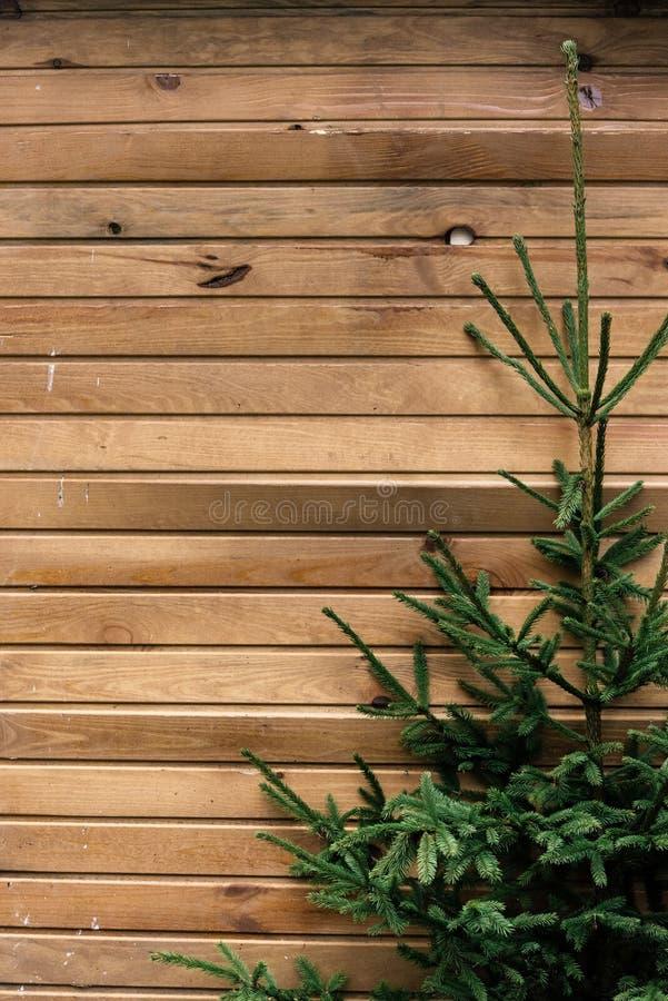 L'albero di Natale verde fresco si ramifica sulle plance di legno, wo naturale immagine stock