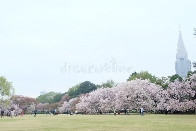 L'albero di Sakura in shinjuku gyoen il giardino nazionale fotografia stock libera da diritti