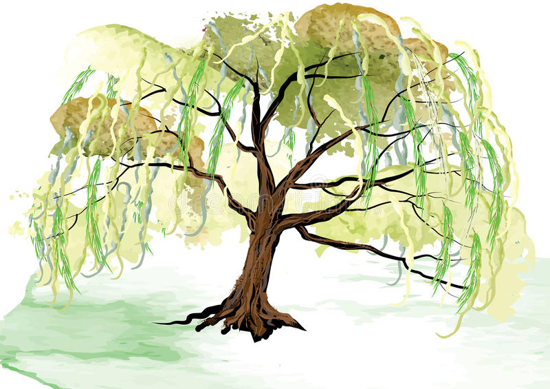L'albero di salice sull'architettura del pæsaggio al suolo, sguardo dell'acquerello ha creato con la spazzola illustrazione vettoriale