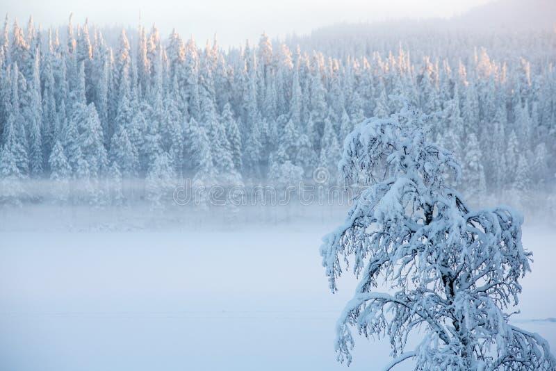 L'albero di Snowy con nebbia sui pini di un inverno abbellisce fotografia stock libera da diritti