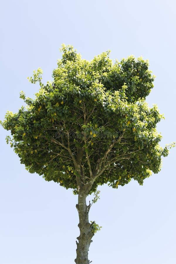 L'albero di superiore pesantezza immagini stock libere da diritti