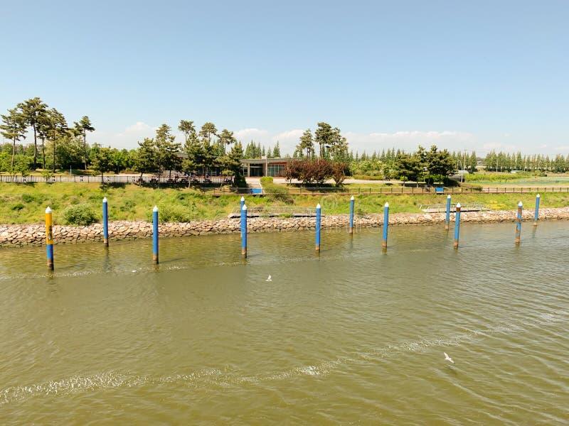 L'albero di verde del fiume ed i precedenti del cielo fotografia stock libera da diritti