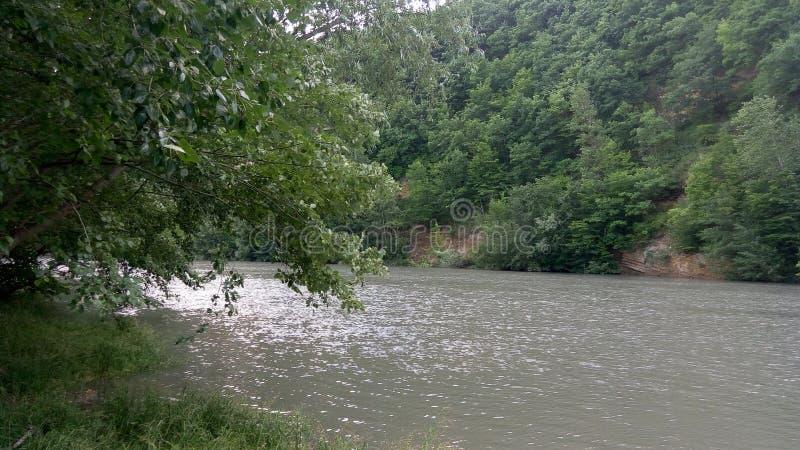 L'albero ed il fiume immagine stock libera da diritti