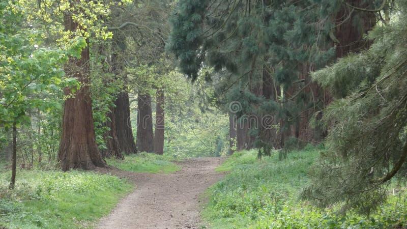L'albero ha allineato il viale al parco nazionale 1 di Havering immagini stock