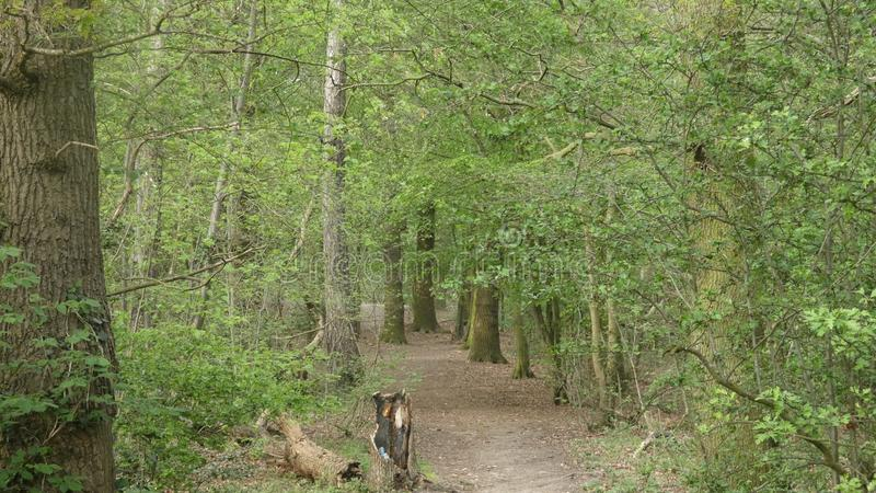 L'albero ha allineato il viale al parco nazionale 7 di Havering fotografie stock