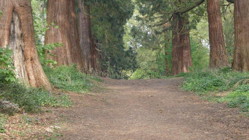 L'albero ha allineato il viale al parco nazionale 4 di Havering fotografia stock