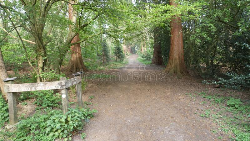 L'albero ha allineato il viale al parco nazionale 6 di Havering fotografia stock